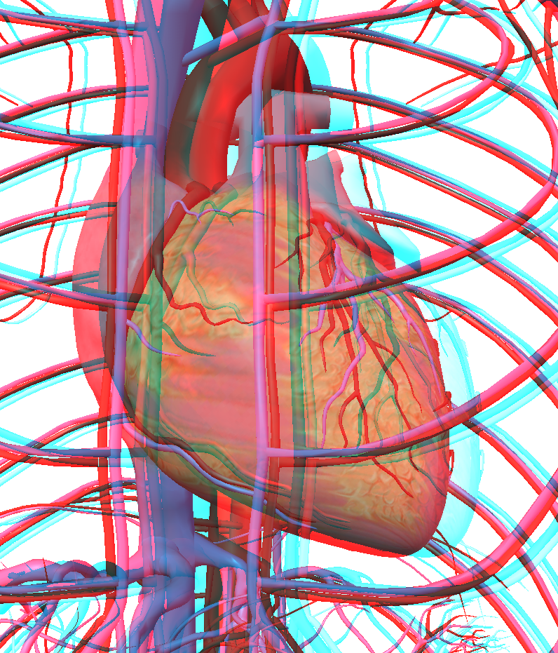 3D image - anaglyph - 3D human body - heart